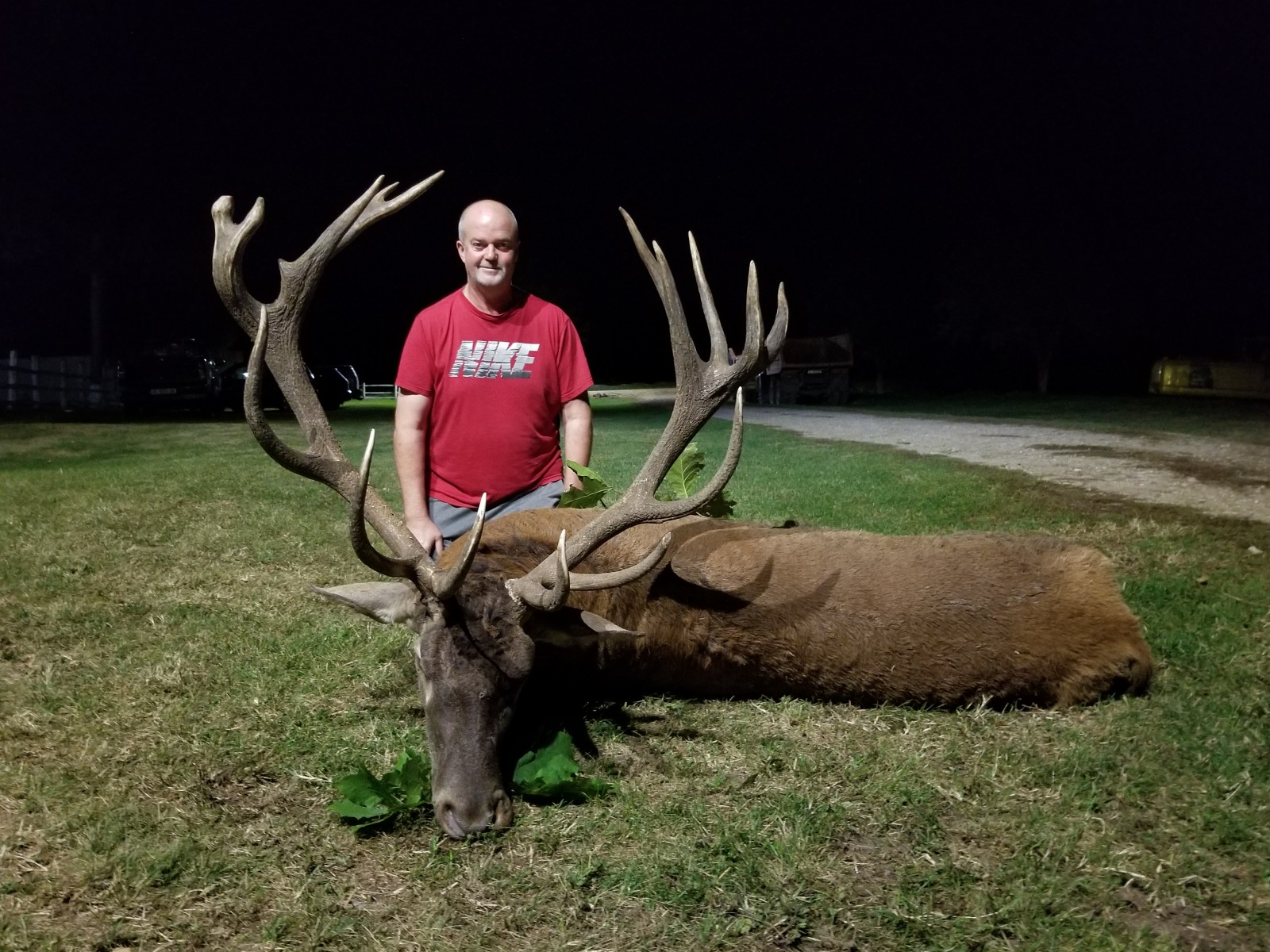 Red Stag   Bulgaria